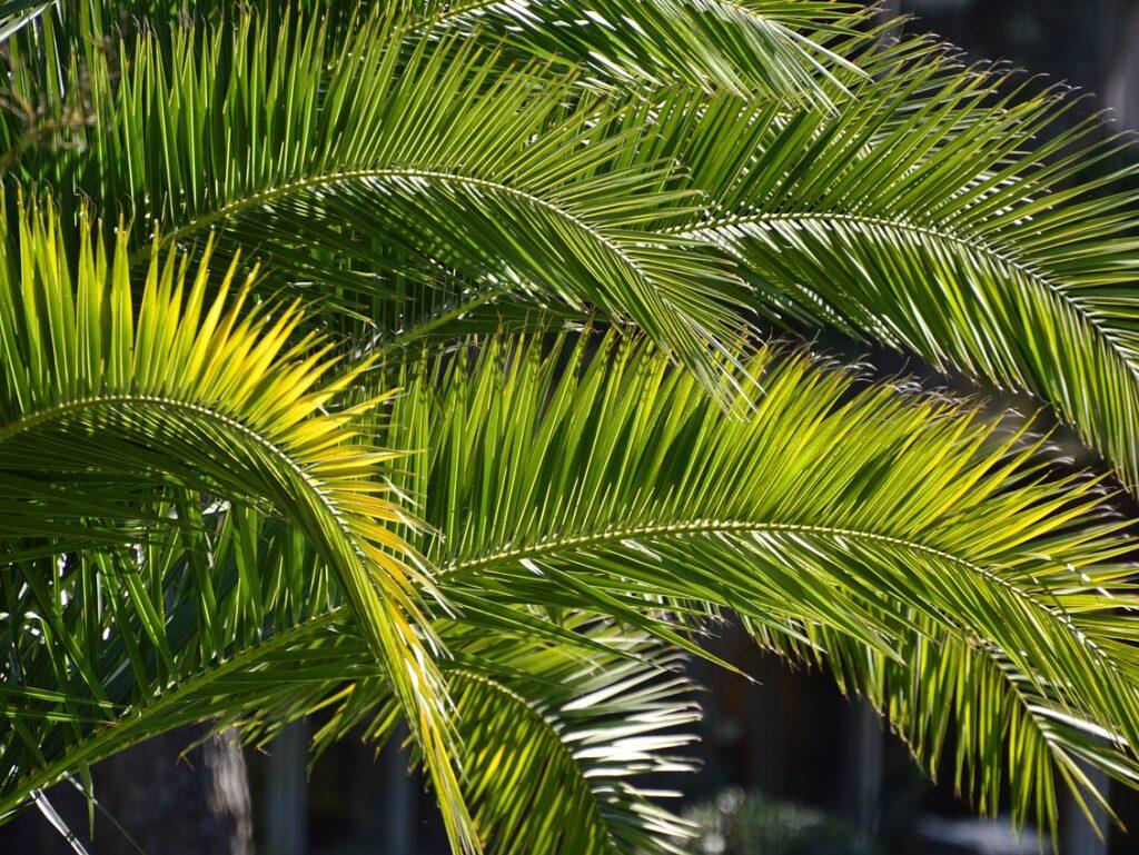 Il saluto di Francesco e Giovanni alla vigilia delle Palme 2020